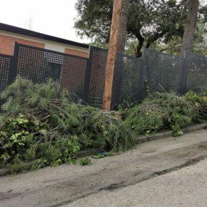 Ciudadanos (Cs) Torrelodones reclama un plan de actuación ante la acumulación cada vez mayor de restos de poda en las aceras y calzadas
